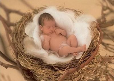 Mini nid d oiseau