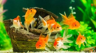 Mini poisson 2